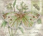Серия «Бабочка» 1
